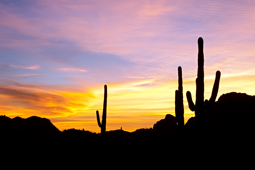 Sonoran Desert Sunset with Sahuaro Cactus